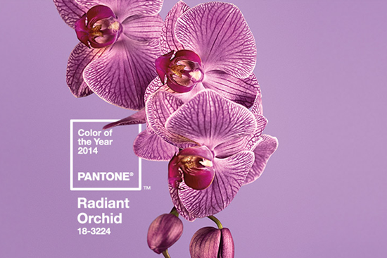 pantone-colo-radiant-orchid