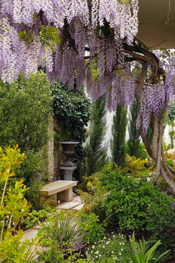 Beautiful Wisteria Garden