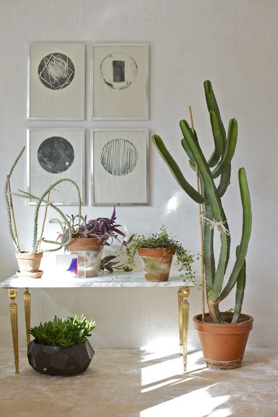 Desert Theme Potted Plants
