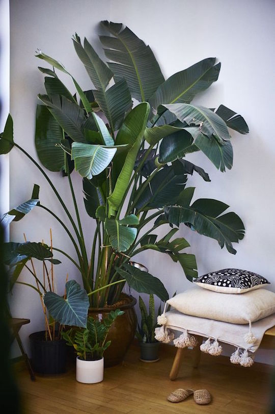 Potted Plants & Greenery